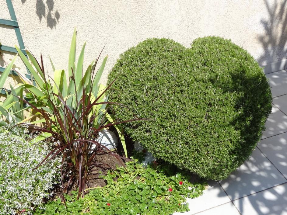 heart-rosemary