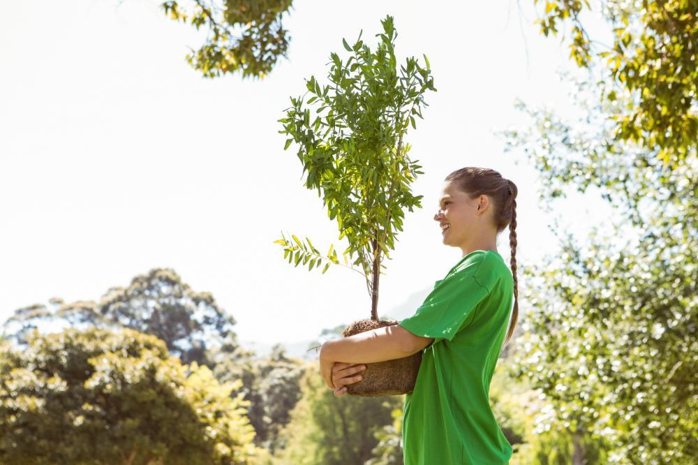planting-utah-trees