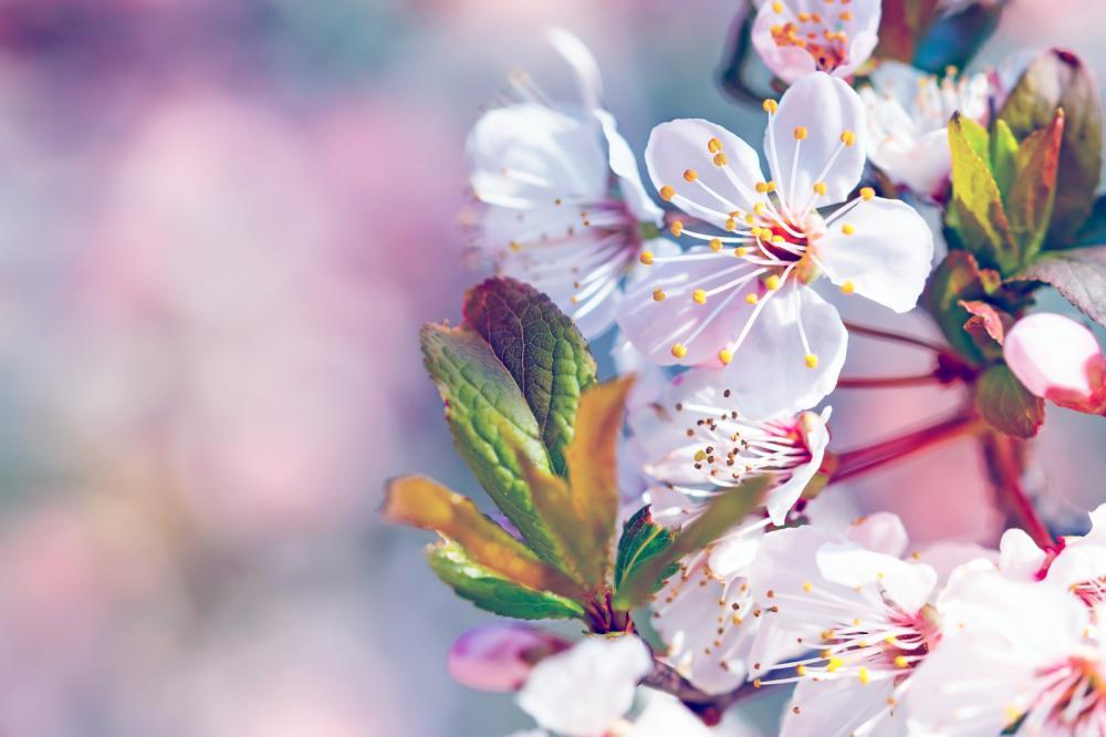 pruning-utah-fruit-trees