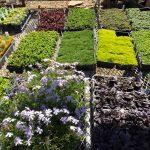 riverton-utah-garden-ground-cover