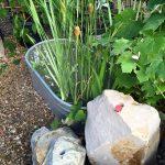riverton-utah-garden-nursery-12