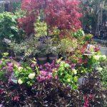riverton-utah-garden-nursery-16
