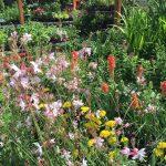 riverton-utah-garden-nursery-17