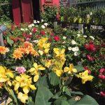 riverton-utah-garden-nursery-19