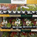 riverton-utah-garden-nursery-2