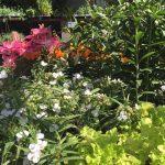 riverton-utah-garden-nursery-20