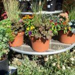 riverton-utah-garden-nursery-23
