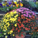 riverton-utah-garden-nursery-24
