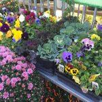 riverton-utah-garden-nursery-25