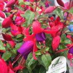 riverton-utah-garden-nursery-26