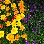 riverton-utah-garden-nursery-27