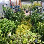 riverton-utah-garden-nursery-28