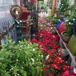 riverton-utah-garden-nursery-29