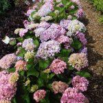 riverton-utah-garden-nursery-3