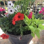riverton-utah-garden-nursery-30