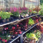 riverton-utah-garden-nursery-31