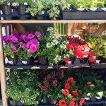 riverton-utah-garden-nursery-32