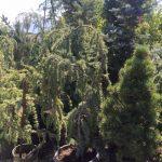 riverton-utah-garden-nursery-33