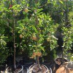 riverton-utah-garden-nursery-34