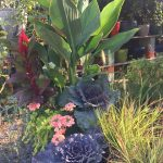 riverton-utah-garden-nursery-35