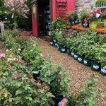 riverton-utah-garden-nursery-38