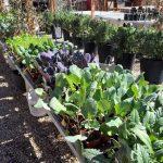 riverton-utah-garden-nursery-4