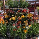 riverton-utah-garden-nursery-43