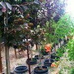 riverton-utah-garden-nursery-48
