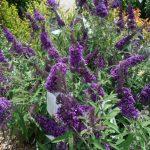 riverton-utah-garden-nursery-5