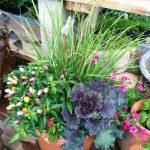 riverton-utah-garden-nursery-50