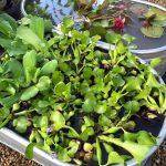 riverton-utah-garden-nursery-8