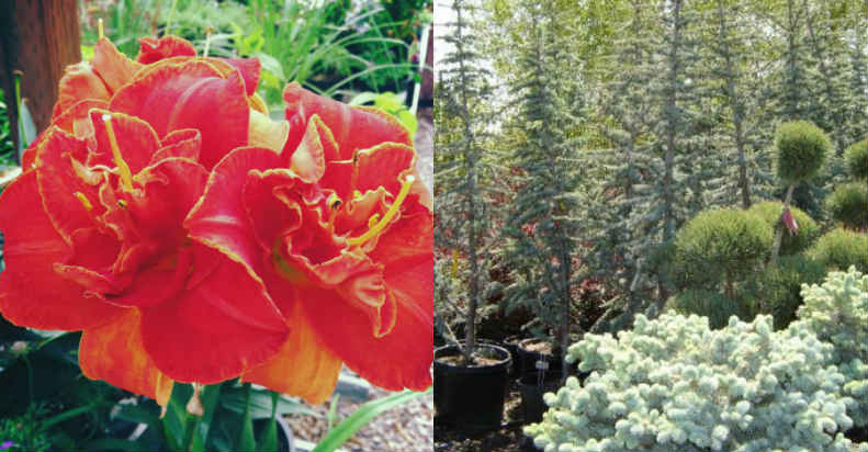 riverton-utah-nursery-plants