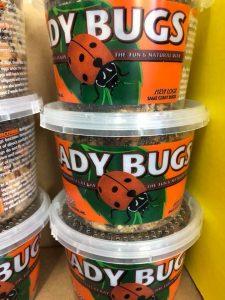 Utah Garden Lady Bugs