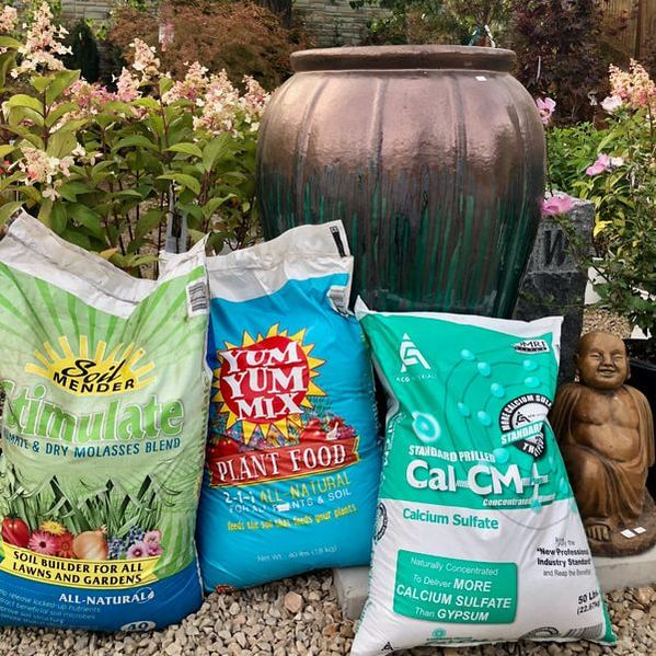 Arbor Day's Magic Planting Formula