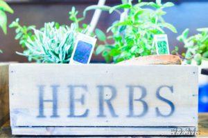 Utah Potted Herbs